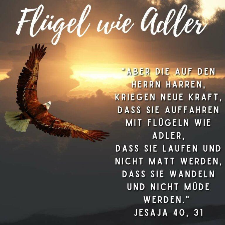 Bibelvers Jesaja 40, 31